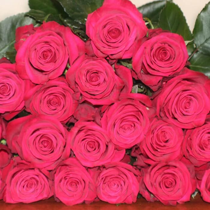 Roseberry Rose