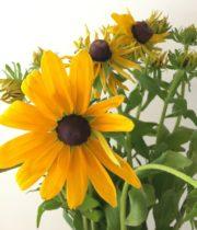 Rudbeckia-yellow