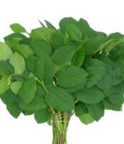 Salal Leaf Tips