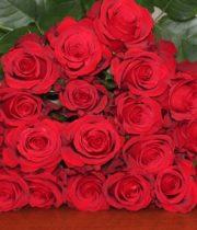 Rose, Sexy Red-SA