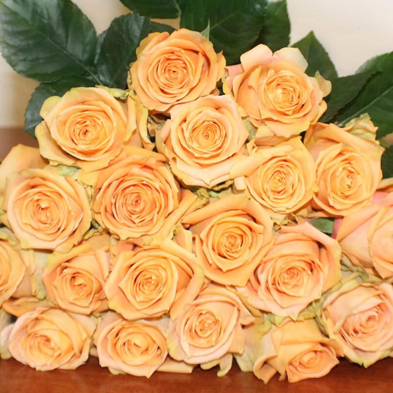 Shukrani Rose