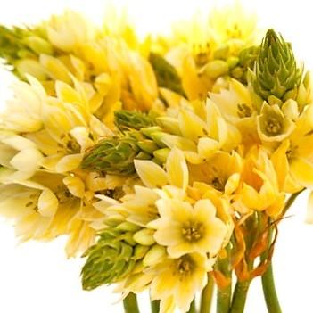 yellow-star-bethlehem