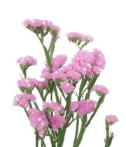 Statice, Sinuata-pink