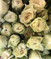 Rose Spray, White Hurricane-CA