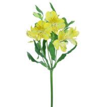 Alstroemeria-yellow