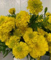 Marigolds, African-yellow