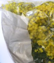 Acacia, Bagged-yellow