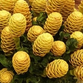 wholesale ginger-beehive