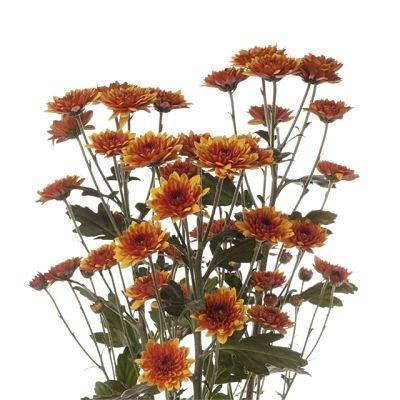 wholesale flowers | spray mums- cushion bronze