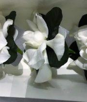 Gardenia Box, Semi-24 Blooms