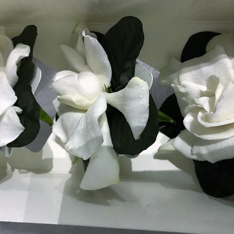 gardenia-fancy-boxed