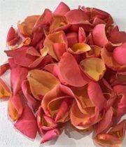Rose, Petal Bag-coral