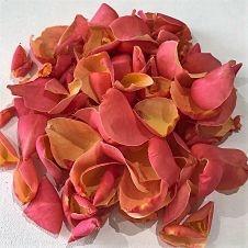 wholesale flowers | rose petals coral