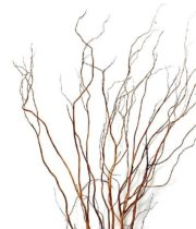 Curly Willow Branches, Medium