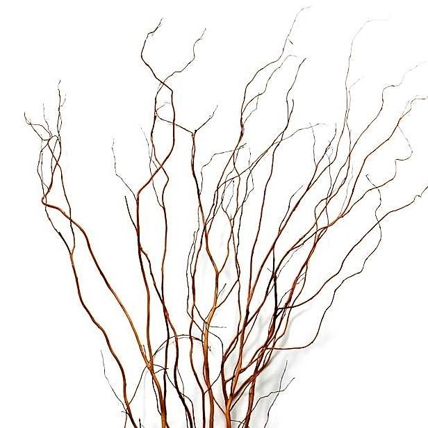 curly-willow-medium