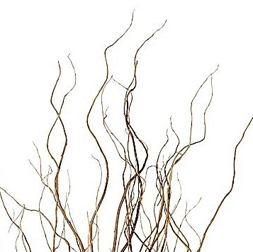 curly-willow-tips