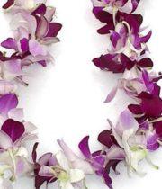 Orchid Lei, Dendro Single-white/purple