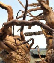 Driftwood-medium