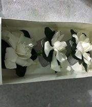 Gardenia Box, Fancy-3 Blooms