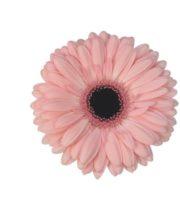 Gerberas, Mini-light Pink (10 Stems)
