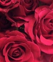 Rose, Hot Lady-SA