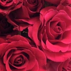 wholesale flowers | rose hot lady