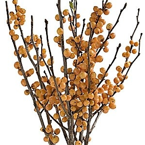 golden berry Ilex