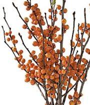Ilex Berry, Tall-orange