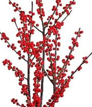 Ilex Berry, Medium-red
