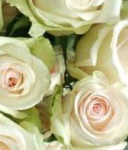 Rose, La Perla-SA
