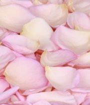 Rose, Petal Bag-light Pink