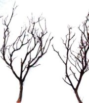 Branch, Manzanita-brown, 24″