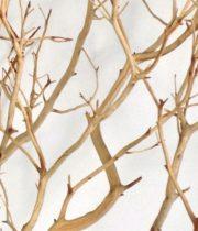 Branch, Manzanita-sandblasted, 24″