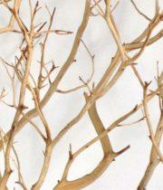 Branch, Manzanita-sandblasted-24″