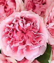 Rose Garden, Miranda-SA