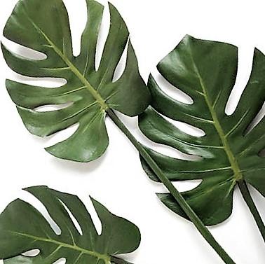 monstera-leaves-mini