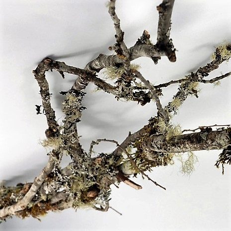 moss-branches