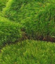 Moss, Mood