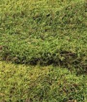 Moss, Sheet