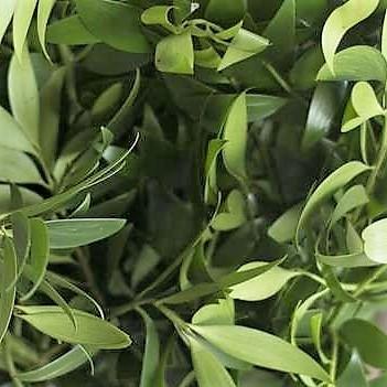 nagi-green