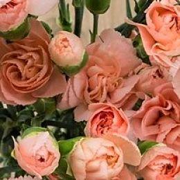 wholesale peach carnation spray