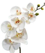 Phalaenopsis Spray-white/yellow