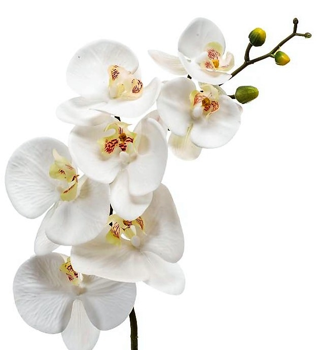 wholesale flowers | phalaenopsis orchid spray- white