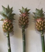 Pineapple-mini-stems
