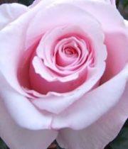 Rose, Anna-SA