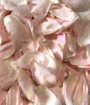 Rose, Petal Bag-pink