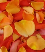 Rose Petal Bag-orange