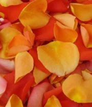 Rose Petal Bag-orange