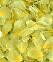 Rose, Petal Bag-green