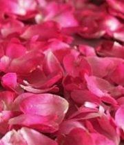 Rose, Petal Bag-hot Pink